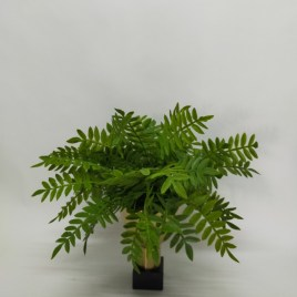 Chinese Evergreen in Gold Pedestal Bowl