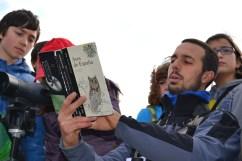 Andrés amosounos como diferenciar as diferentes especies de gaivotas