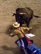 Clowns job to keep bull from trampling the cowboy