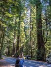 Cheryl capturing the height of the coastal redwoods