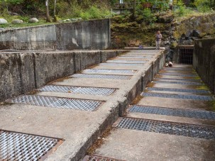 Part of the 'fish ladder'