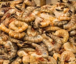 Giant, jumbo shrimp