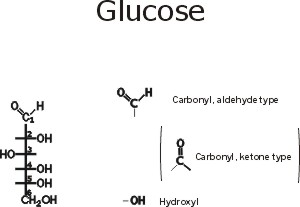 So, first, POLYSACCHARIDES: The MONOMERS here are SUGARS