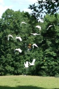 photo of dove release