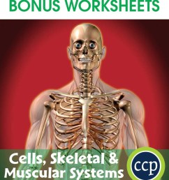 -skeletal-muscular-systems-bonus-worksheets-cc4516d [ 1046 x 900 Pixel ]