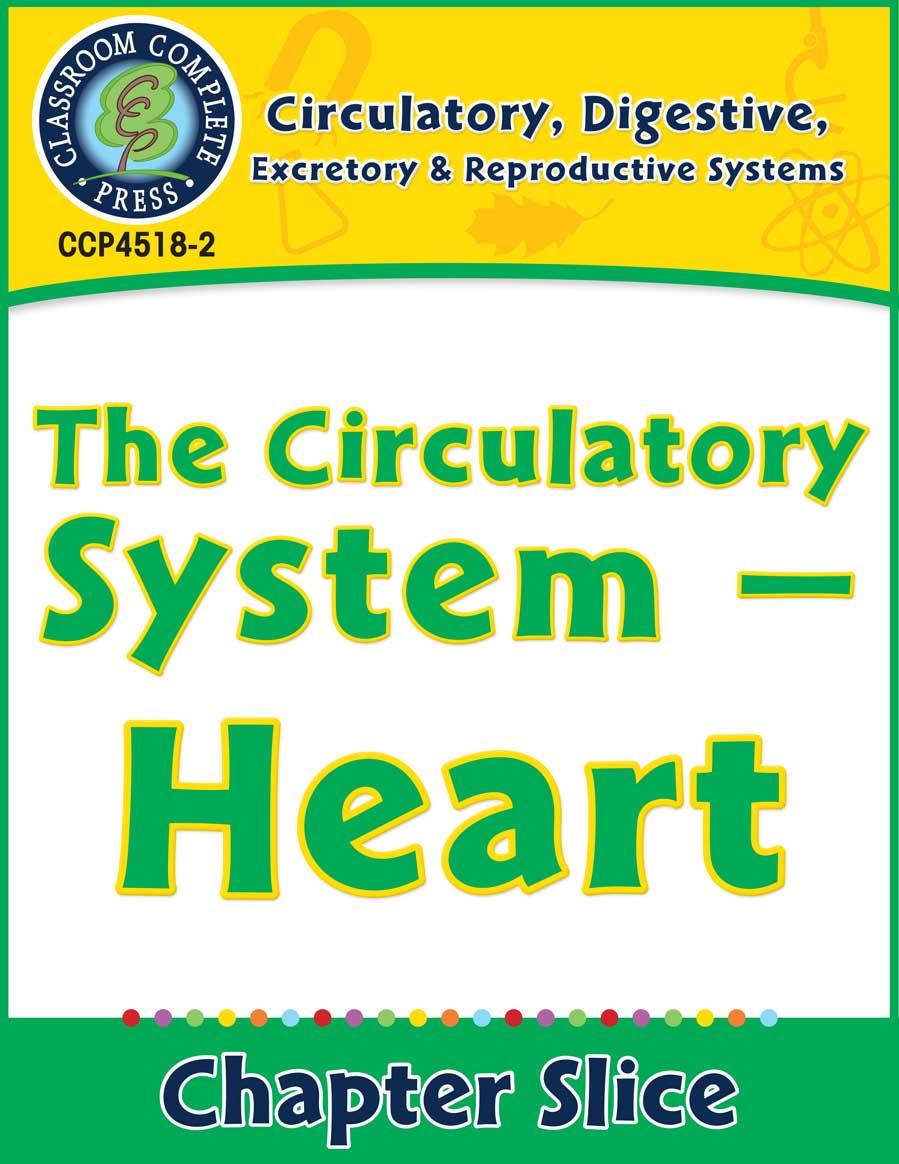 medium resolution of Circulatory