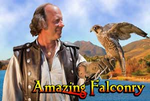 Amazing-Falconry