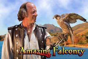 Amazing-Falconry