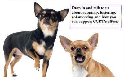Pet Adoption Event at Pet Valu : April 22, 2017  11:00 – 3:00