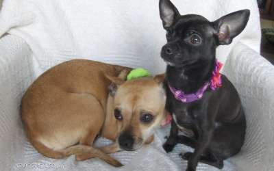 Cookie and Ruby are a Bonded Pair : Adoption Pending