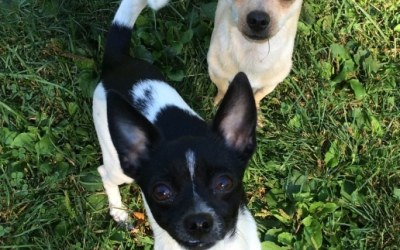 Milo and Otis : Adopted!