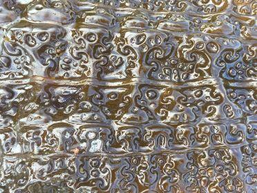 Close-up seaweed