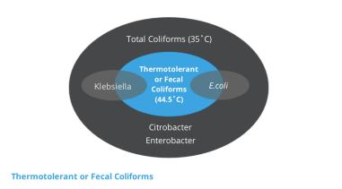 Thermotolerant bacteria