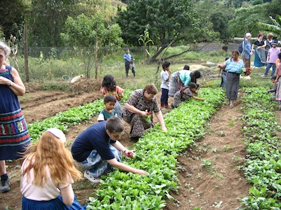 CCS students help out in the fields in Guatemala