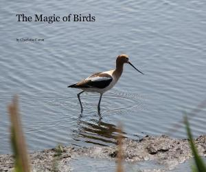 magicofbirds