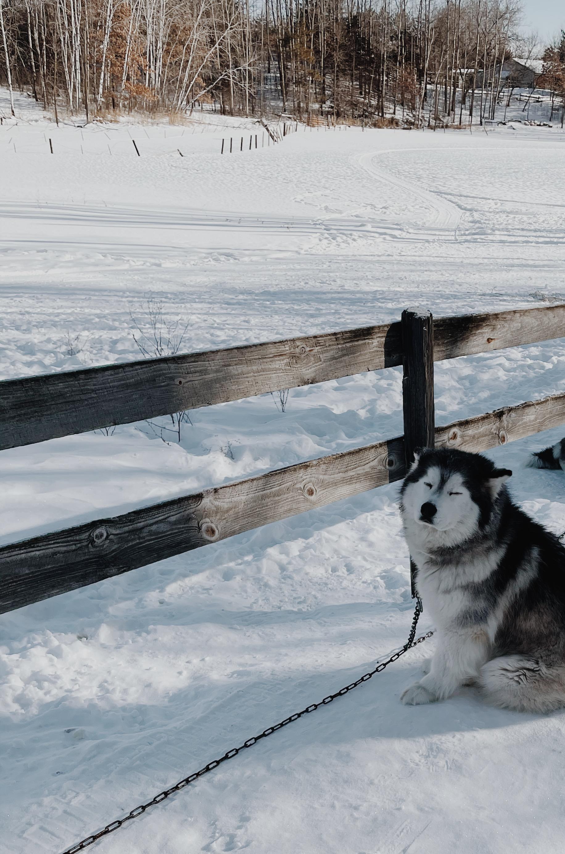 Dog-sledding in Minnesota