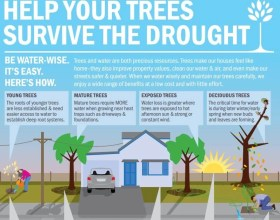 How to Help Your Trees Survive the Drought