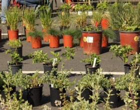 CCWD Partners with CNPS to Host Fourth Annual Native Plant Sale