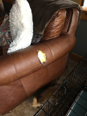 """""""I have concluded the human does not hide inside this chair. On to the thing they call the couch."""""""