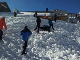 Recherche avec Chien d'avalanche