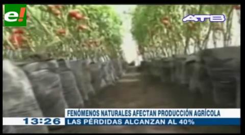 Tarija pierde el 40% de su producción agrícola por los fenómenos naturales