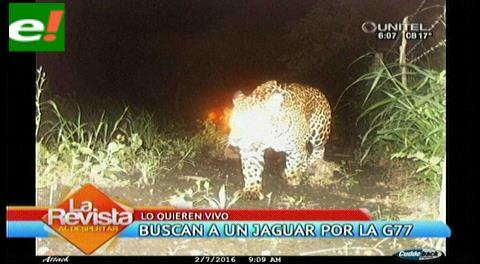 Gobernación asegura que están buscando capturar al jaguar de la G77