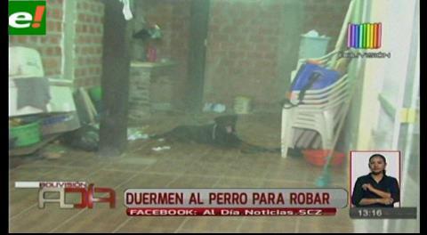 Duermen al perro de una vivienda para robar