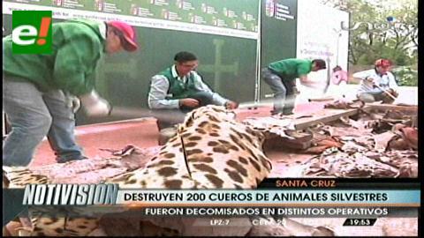 Destruyen 90 cueros de animales silvestres