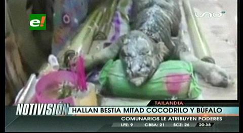 """Hallan en Tailandia una bestia """"mitad cocodrilo, mitad búfalo"""""""