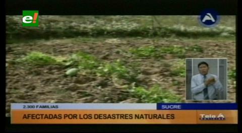 Chuquisaca: 4.000 familias pierden producción agrícola