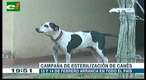 Gobierno anuncia campaña de esterilización de canes