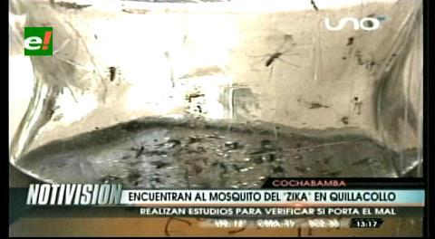 El insecto del zika se expande a Quillacollo, Colcapirhua y Aiquile