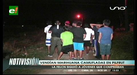 Felcn allana vivienda donde supuestamente se vendía marihuana en pilfrut