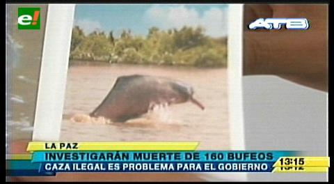 Gobierno señala que la pesca ilegal del bufeo es delito e investiga para tomar acciones legales
