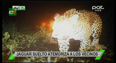 Santa Cruz: Gobernación verificará si jaguar mató a un caballo