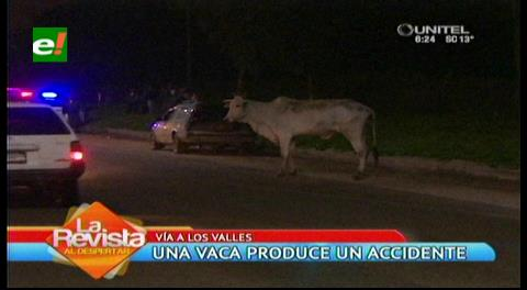 Santa Cruz: Vaca provoca un triple accidente en la carretera a los valles