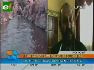Potosí estrenará su criadero de truchas en el Silala y buscan nuevas formas de aprovechar sus aguas
