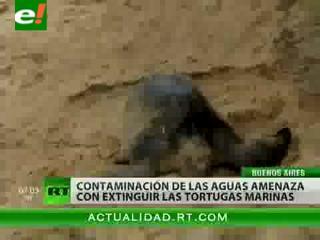 La basura está matando a las tortugas en el Mar Argentino