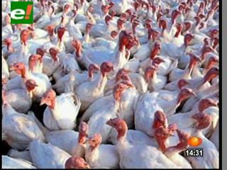 Científicos crían aves de corral que no desarrollan la gripe aviar