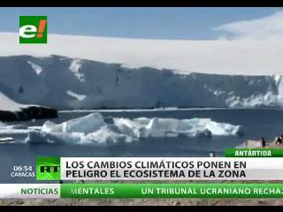 Ecosistema de la Antártida en peligro de extinción