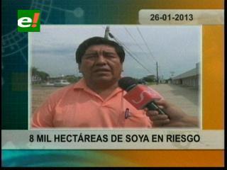 Sequía afecta la zona este de Santa Cruz, 8 mil hectáreas de soya están en riesgo