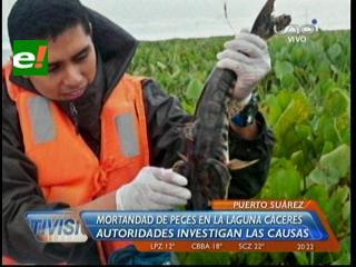 Gobernación investiga mortandad de peces en la Laguna Cáceres