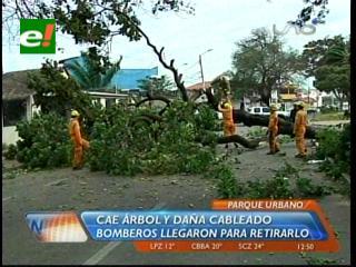 Fuertes vientos derrumban árboles en la capital cruceña