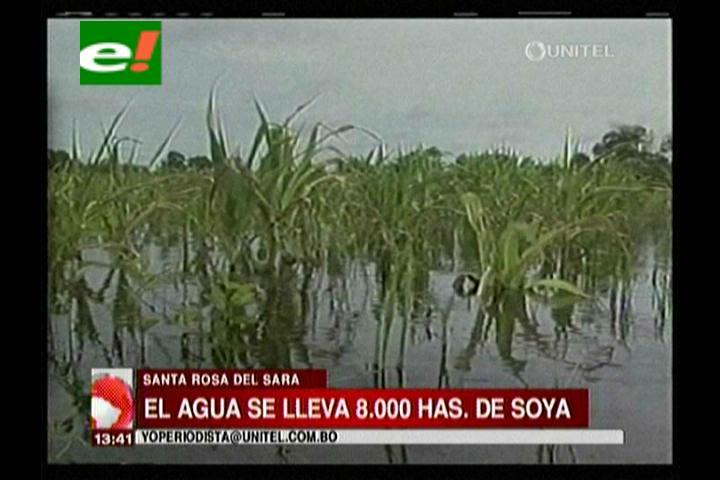 Santa Rosa del Sara: 8 mil hectáreas de soya y arroz afectadas por desborde del río Palacio