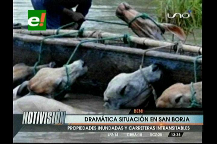 Dramática situación en San Borja por las intensas lluvias