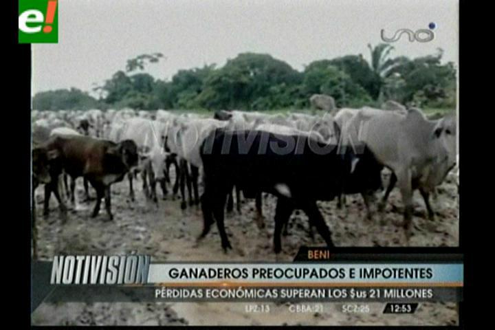Pérdidas por el ganado sube a 20 millones de dólares