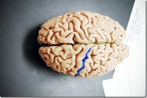 Lab-brain-800x535