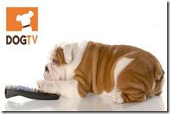 directv-dog-pan