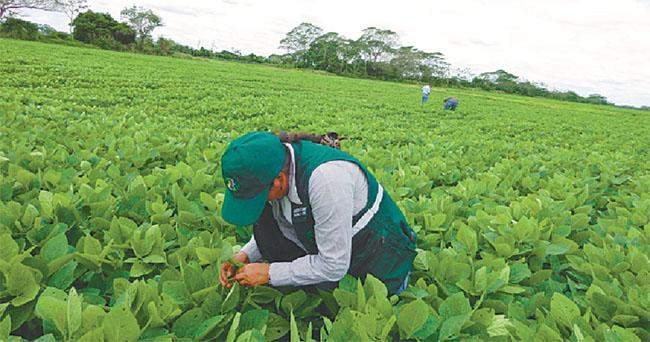 Agro cruceño se moviliza por una plaga que amenaza los cultivos más importantes