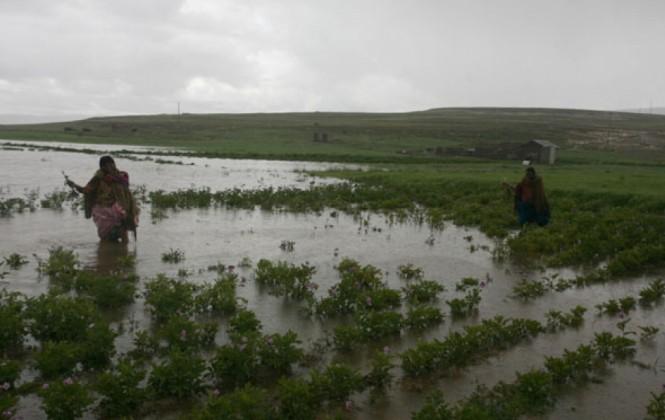 Gobernación de Potosí descarta desabastecimiento de productos agrícolas